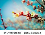 spring blooming trees against... | Shutterstock . vector #1053685085