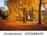 beech trees in beautiful autum... | Shutterstock . vector #1053688445