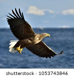 adult white tailed eagle in... | Shutterstock . vector #1053743846