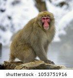 snow monkey on the snow. winter ...   Shutterstock . vector #1053751916