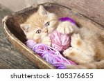 Stock photo exotic kitten playing with a ball of wool 105376655