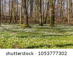 spring time in south sweden ... | Shutterstock . vector #1053777302