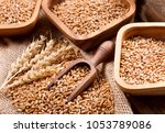 grains and wheat ears on a... | Shutterstock . vector #1053789086