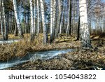 white birch and thaw against... | Shutterstock . vector #1054043822