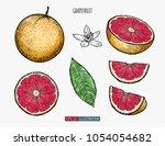 hand drawn grapefruit isolated. ...   Shutterstock .eps vector #1054054682