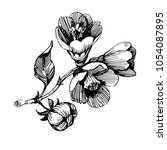 wild flowers roses isolated.... | Shutterstock .eps vector #1054087895