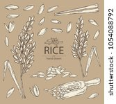 collection of rice  plant ... | Shutterstock .eps vector #1054088792
