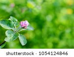 beautiful branch of pink and... | Shutterstock . vector #1054124846