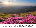 from the lawn covered with...   Shutterstock . vector #1054133966
