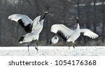 dancing cranes. the red crowned ...   Shutterstock . vector #1054176368