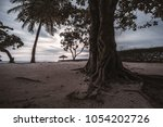 a huge trunk of a tropical tree ... | Shutterstock . vector #1054202726