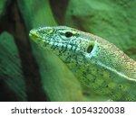 very serious varanus | Shutterstock . vector #1054320038