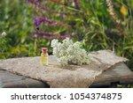 yarrow  achillea essential oil  ... | Shutterstock . vector #1054374875