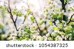 blossom tree over nature... | Shutterstock . vector #1054387325