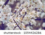 cherry blossom and bee... | Shutterstock . vector #1054426286
