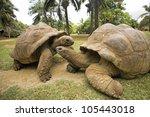 Stock photo two big seychelles turtle giant tortoise 105443018