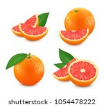set of isolated grapefruits.... | Shutterstock .eps vector #1054478222