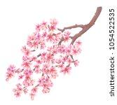 Cherry Blossoms Watercolor....