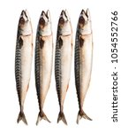fresh  whole mackerels isolated ... | Shutterstock . vector #1054552766