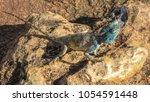 lizard on stone rock | Shutterstock . vector #1054591448