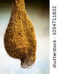 cocoon giant insect. a cluster... | Shutterstock . vector #1054711832