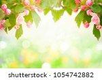 spring blossom garden... | Shutterstock . vector #1054742882