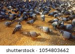 pigeon shots and background  | Shutterstock . vector #1054803662