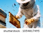 Beekeeper Working Collect Hone...