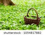 wild garlic harvesting basket...   Shutterstock . vector #1054817882
