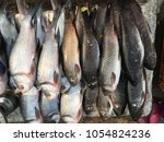 Small photo of Fishes, sale on market, aquatic craniate animals