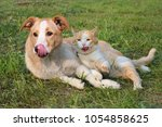 Stock photo  dog and cat licking lips lie together on the grass outdoors 1054858625