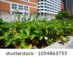 bushes of strawberries in a pot ... | Shutterstock . vector #1054863755