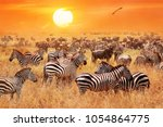 herd of wild zebras and... | Shutterstock . vector #1054864775