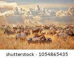 african wild zebras and... | Shutterstock . vector #1054865435