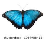 Stock photo blue morpho butterfly morpho peleides isolated on white background 1054908416