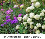 dense luxuriant conical white... | Shutterstock . vector #1054910492