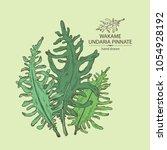 wakame  undaria pinnate seaweed ... | Shutterstock .eps vector #1054928192