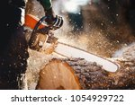 Woodcutter Saws Tree With...