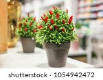 decorative red chili pepper in... | Shutterstock . vector #1054942472