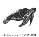 Stock vector vector engraved style illustration for posters decoration and print hand drawn sketch of turtle 1055025368