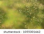 detailed abstract meadow grass...   Shutterstock . vector #1055301662