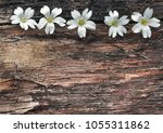 White Florets On The Backgroun...