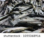 fresh fishes in a market.    Shutterstock . vector #1055368916