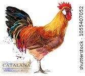 catalana rooster. poultry... | Shutterstock . vector #1055407052