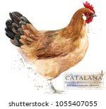 Catalana Hen. Poultry Farming....