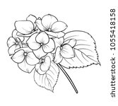 blooming flower hydrangea on... | Shutterstock .eps vector #1055418158