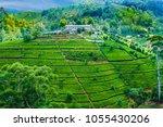 green tea plantation in sri... | Shutterstock . vector #1055430206