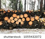 firewood for the winter  stacks ... | Shutterstock . vector #1055432072