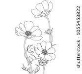 cosmos flowers drawings vector... | Shutterstock .eps vector #1055453822