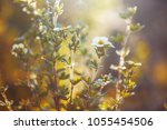 spring nature. meadow outddor... | Shutterstock . vector #1055454506